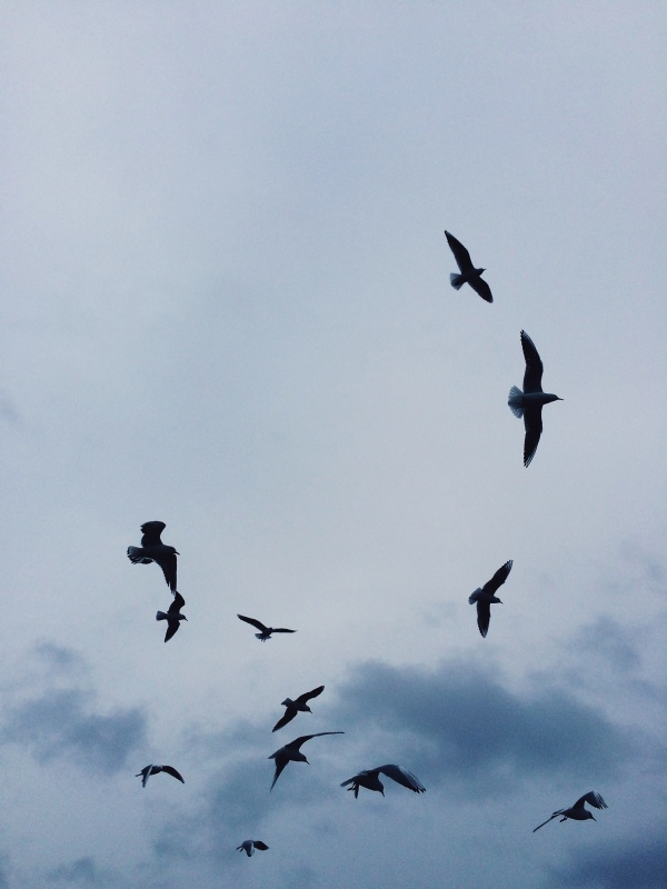 seagulls. #amsterdam | kay