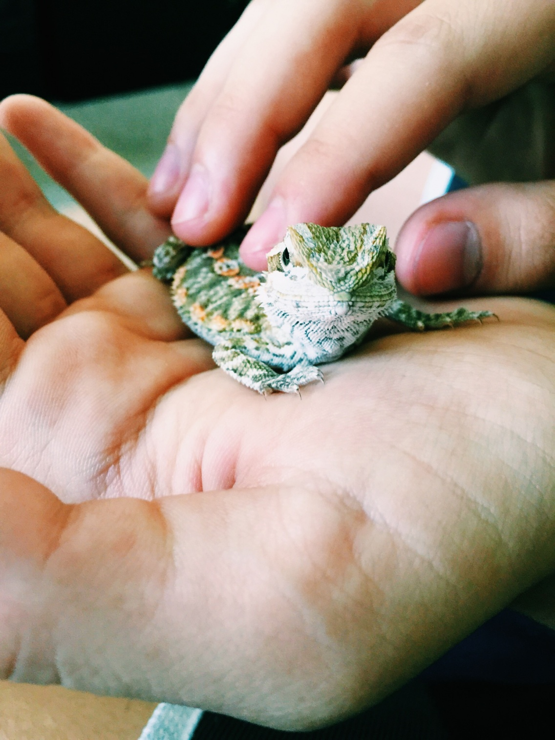 VSCO - We adopted a bearded dragon and named him Drogo  His