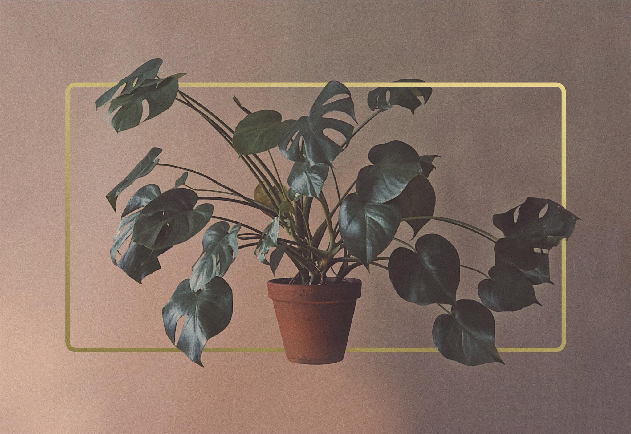 Plant Organic Composition Gold Aesthetic Minimal Retro Frame Highlight Design Acposterdesign Djibirov Vsco