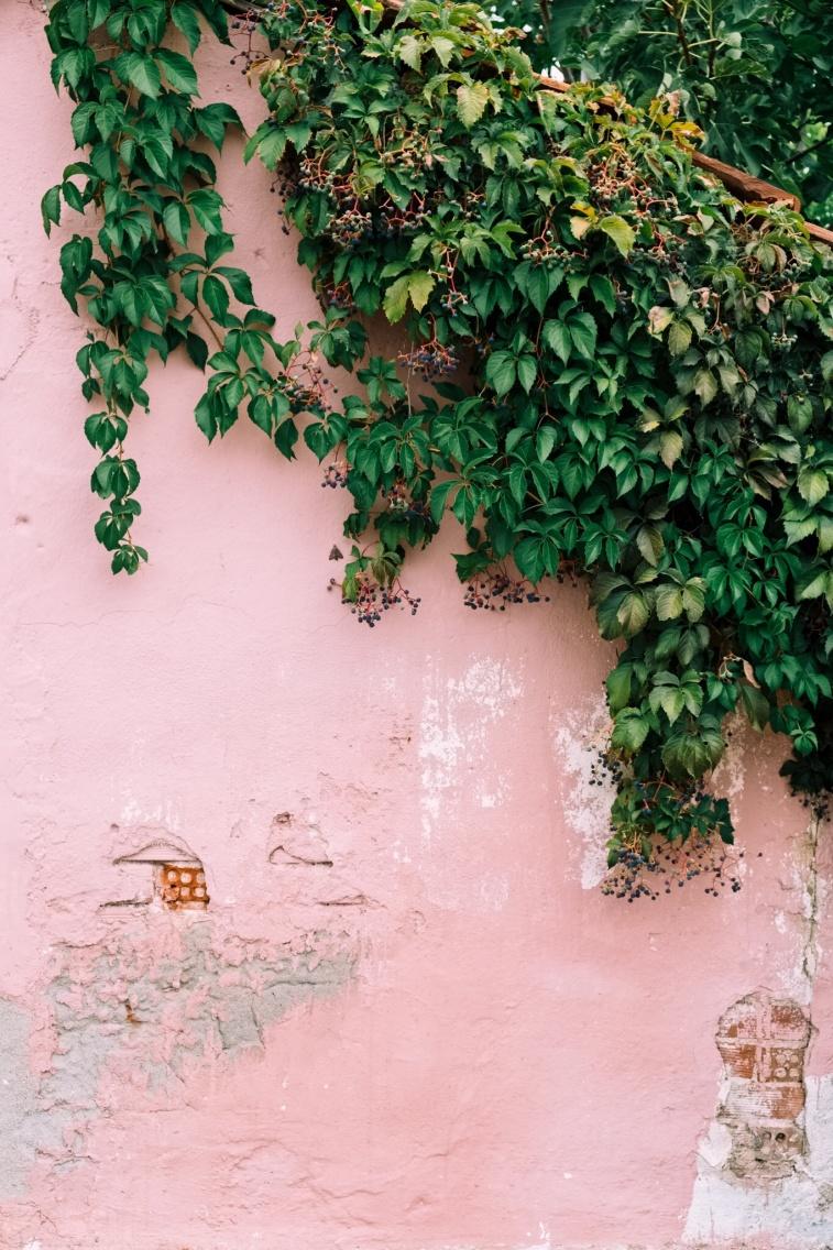 VSCO - #pastel #wall #ivy #building #background #botanical #botany