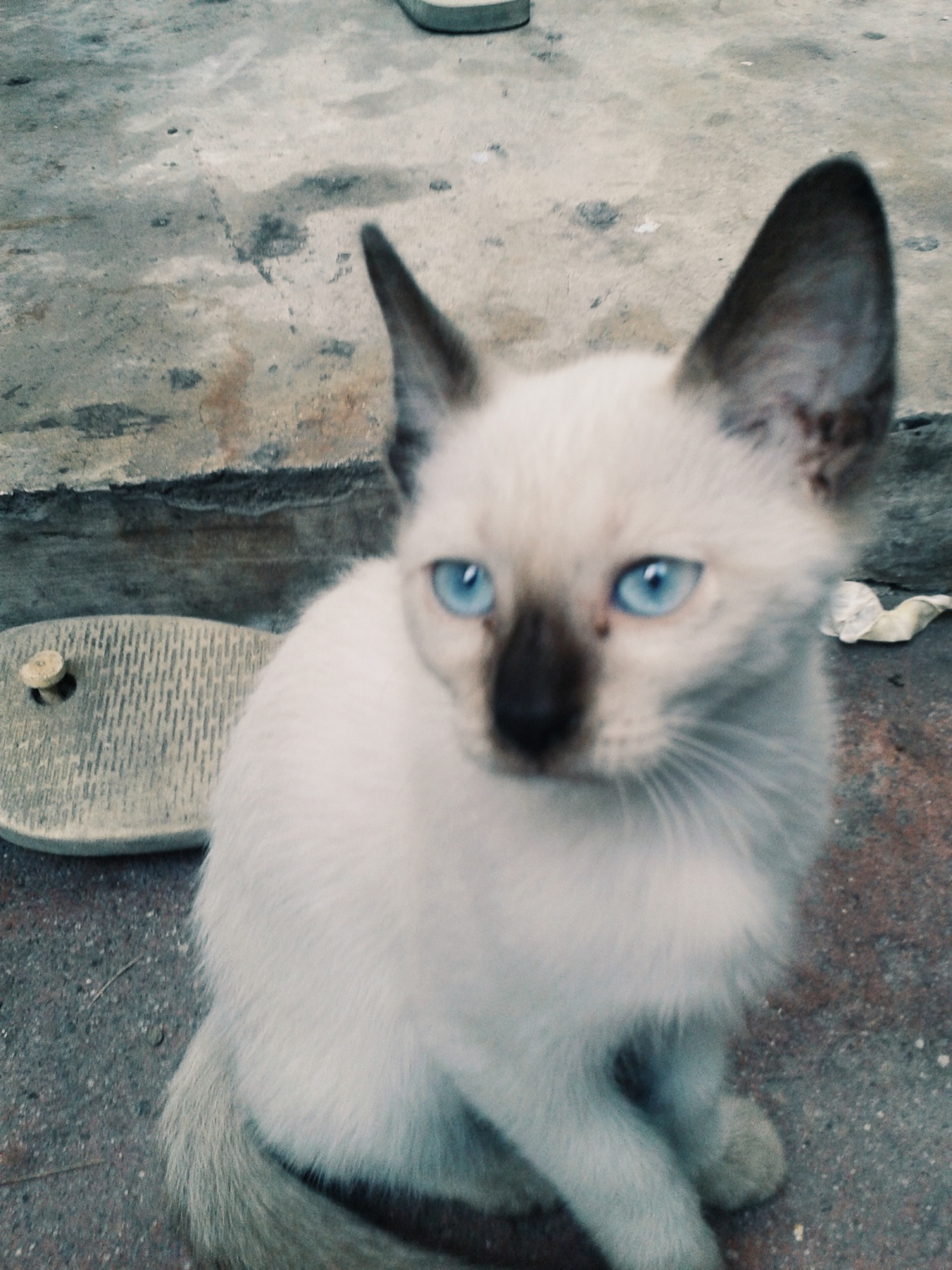 Our Kitten Looks Like Meredith Taylor Swift S Cat Taylorswift Kitten Kerenstar Vsco