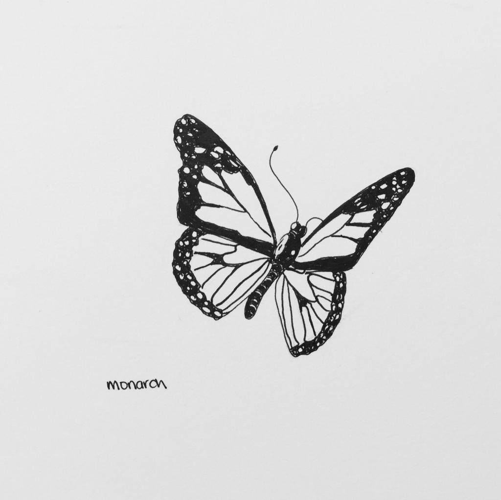 Monarch butterfly sketch drawing art