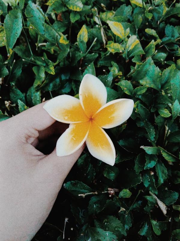 Gambar Bunga Vsco Gambar Bunga